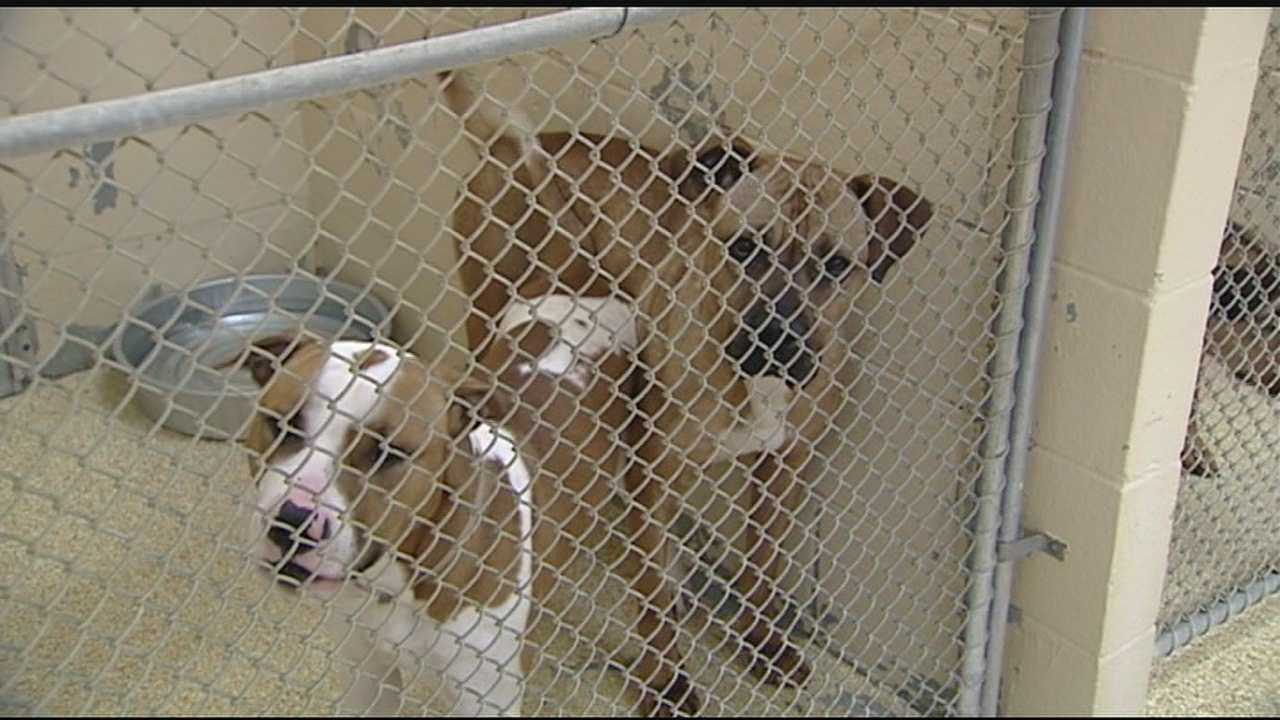 A strain of the flu virus has swept through four states and his dog owners worried about the health of their pet.