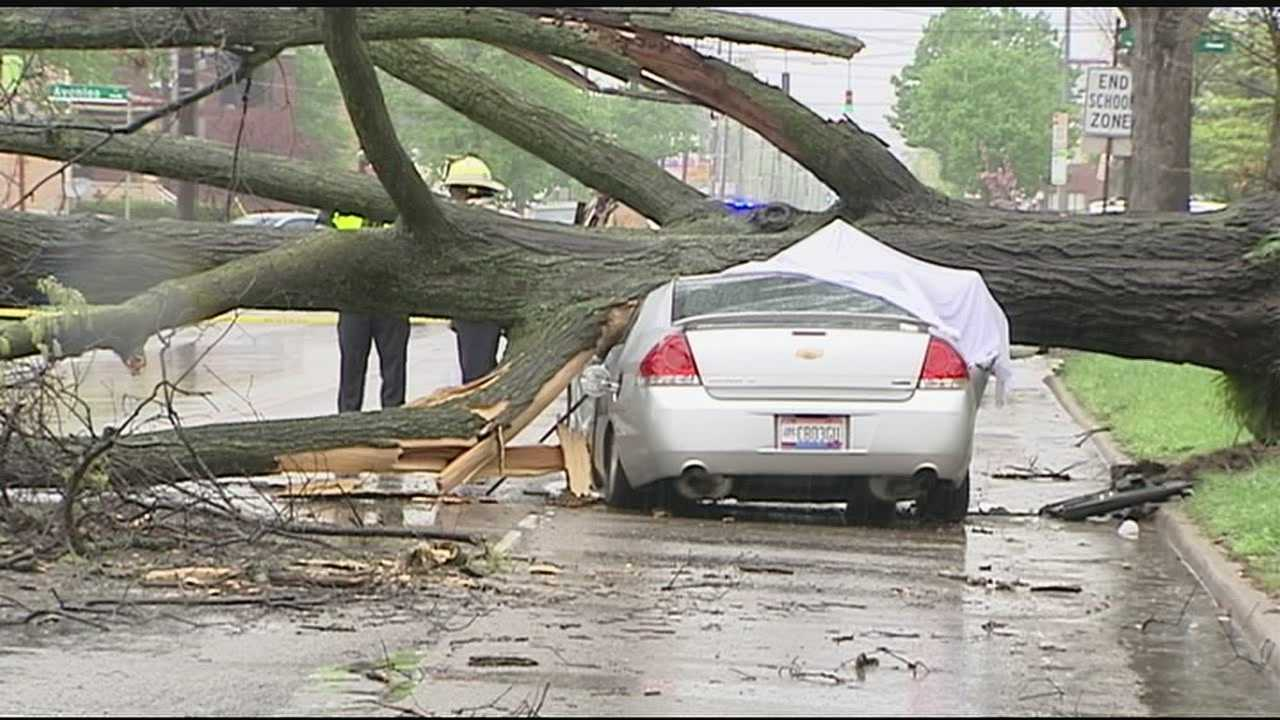 In a news release, the city said that the tree had last been inspected by its Urban Forestry Division in July 2014 and found to be in decline. It was tagged for removal, but was not placed on the list for immediate removal.