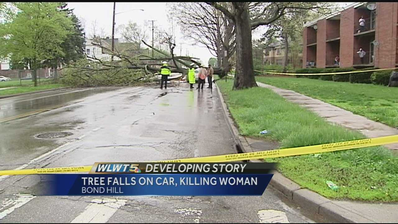 The city of Cincinnati told WLWT the tree had been marked for removal but was not considered an imminent threat.