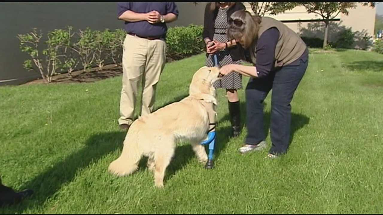 Tiny was born with three legs, but on Wednesday, the 10-month-old dog was learning to walk on a fourth leg created using a 3D printer.