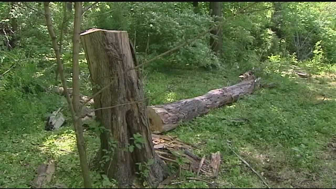 WLWT News 5's Brian Hamrick said a man and his fiancee were working to bring down a tree in a homeowner's backyard when she was struck in the head by part of the falling tree.