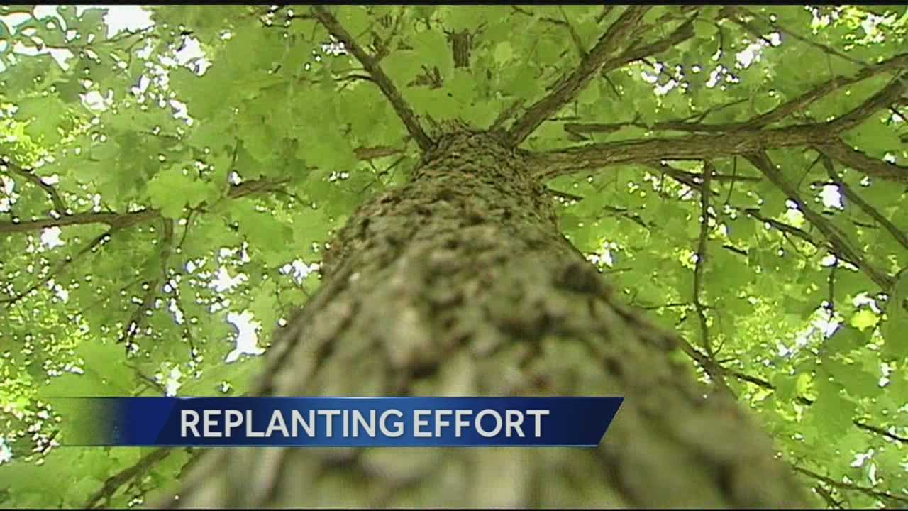 Replanting effort: Get native trees for $15