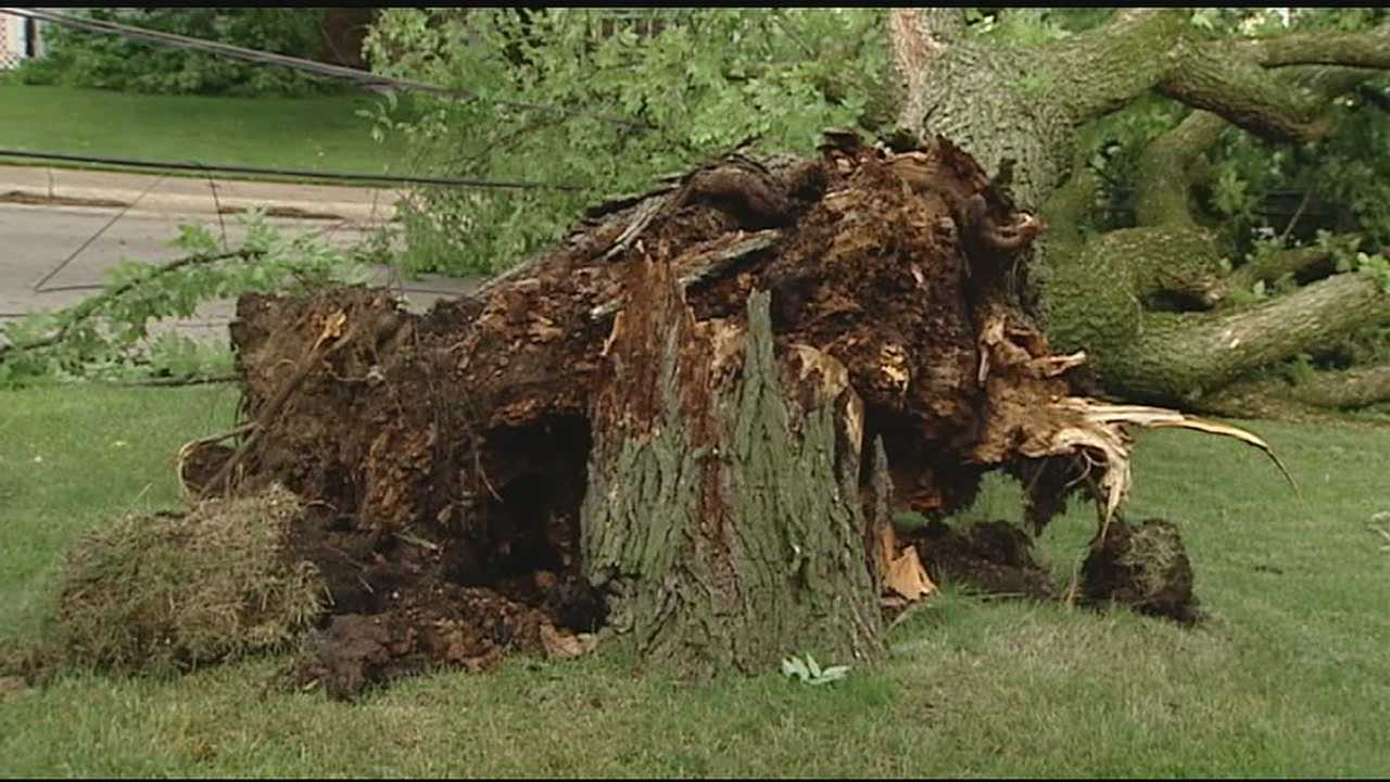 Strong winds and rain caused trees to fall into power lines and other damage.