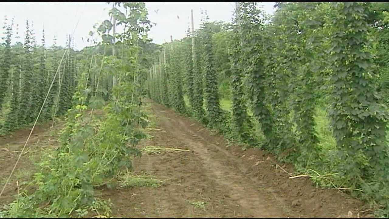 Prior to prohibition, hops were once an agricultural staple in the region.