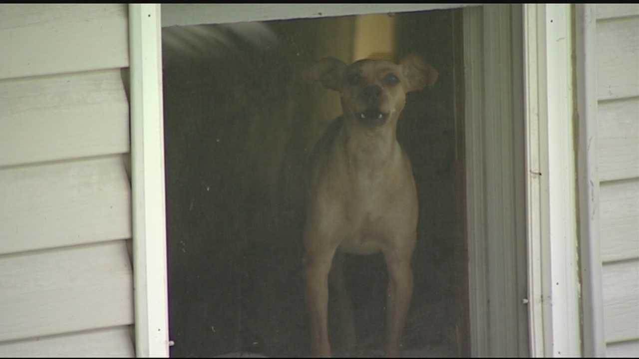 The Grant Animal Shelter posted a warning on their Facebook page telling people to be on the lookout for a small gray truck with light gray primer spots.