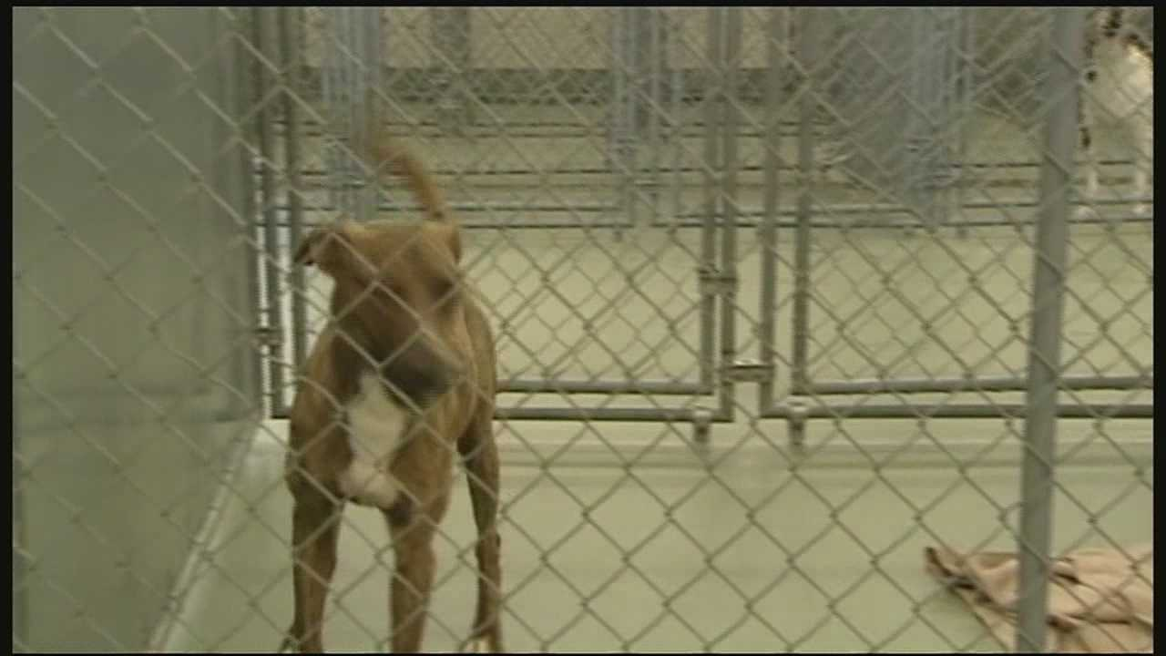 After a parvo outbreak caused nearly two dozen dogs to be euthanized at the Kenton County Animal Shelter, the SPCA is renewing calls to get more dogs vaccinated.