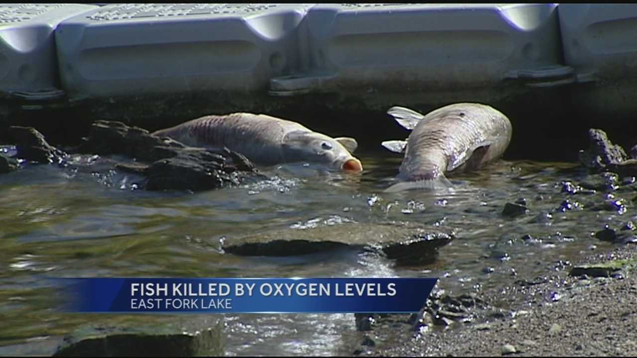 Hundreds of dead fish are washing up on the shores of East Fork Lake in a fish kill so extensive it's surprising even long-time fishermen.