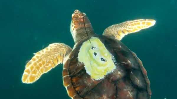 Photo via Newport Aquarium