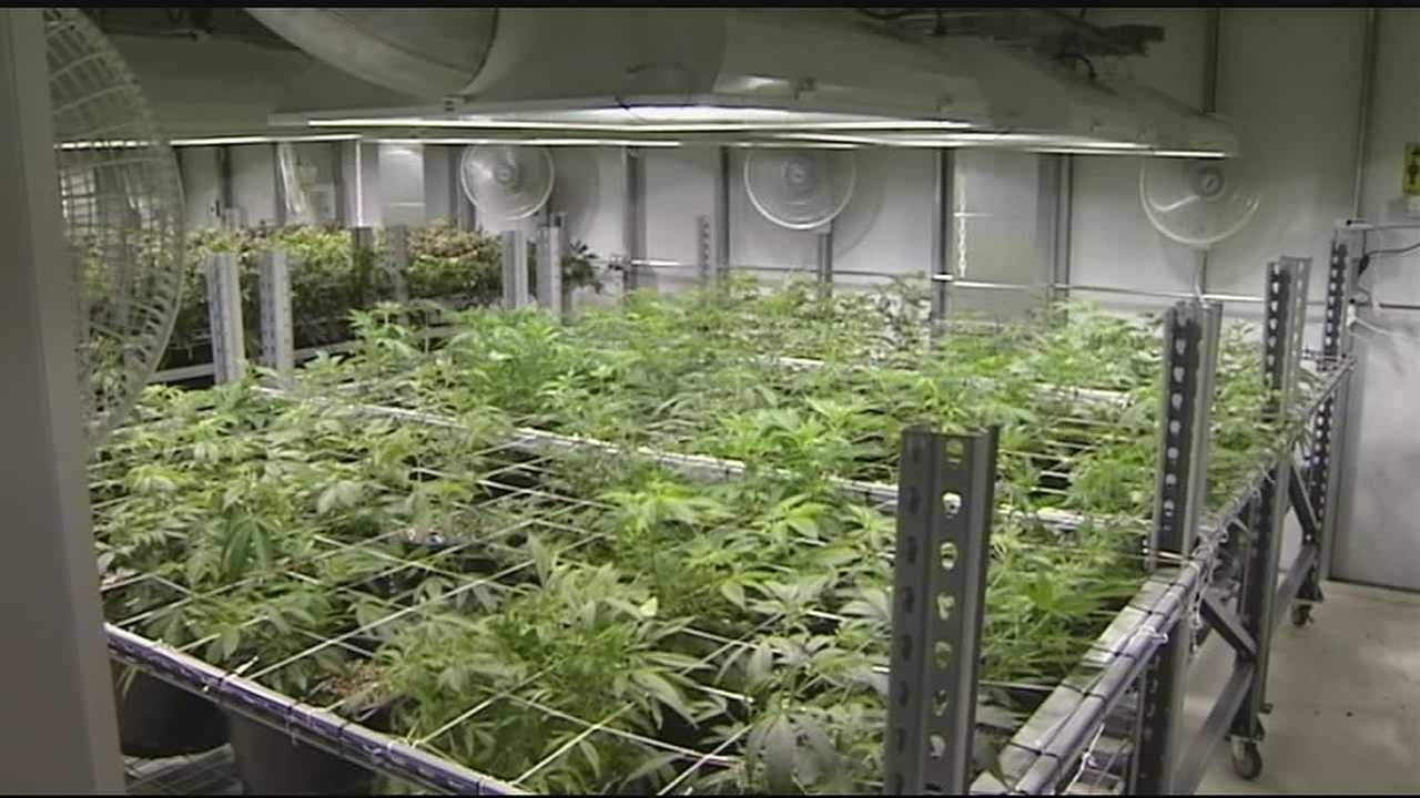 img-Expert marijuana grower ready to get to work if Issue 3 passes_medRes.jpg