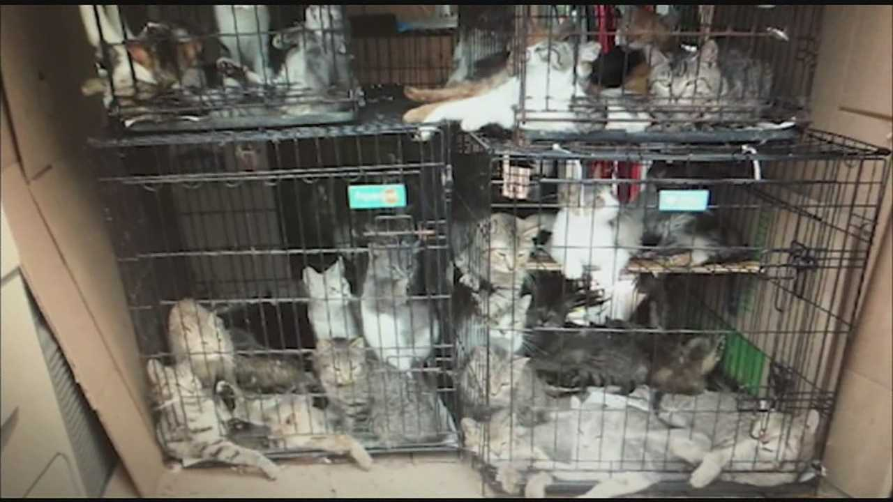 The cats were discovered in June when Union Township police were called to a gas station to check out an unusual smell coming from a van. It was a hot day and the van had no air conditioning, officers said.