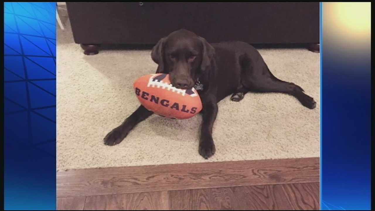 The Bengals are enjoying first place in their division and riding a comfortable 8-1 record. WLWT News 5's Elise Jesse aimed to investigate outside football, what other loves do the players have, like say, pets.