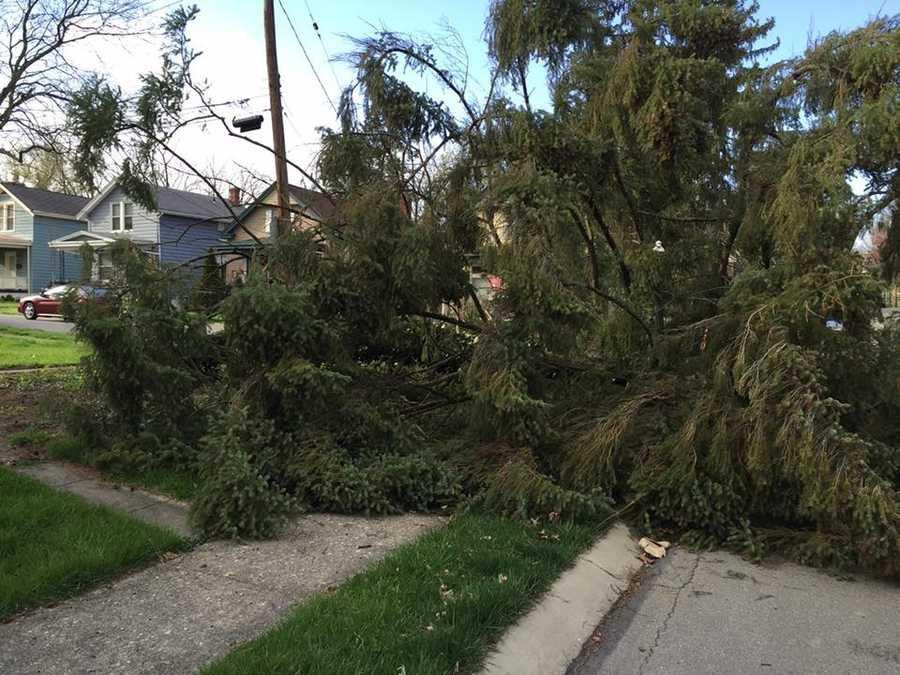 A tree fell at Orion and Dryden in Pleasant Ridge, Cincinnati, Ohio April 2, 2016.