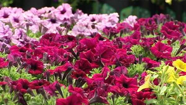Motheru0027s Day Means Big Business For Cincinnati Garden Centers