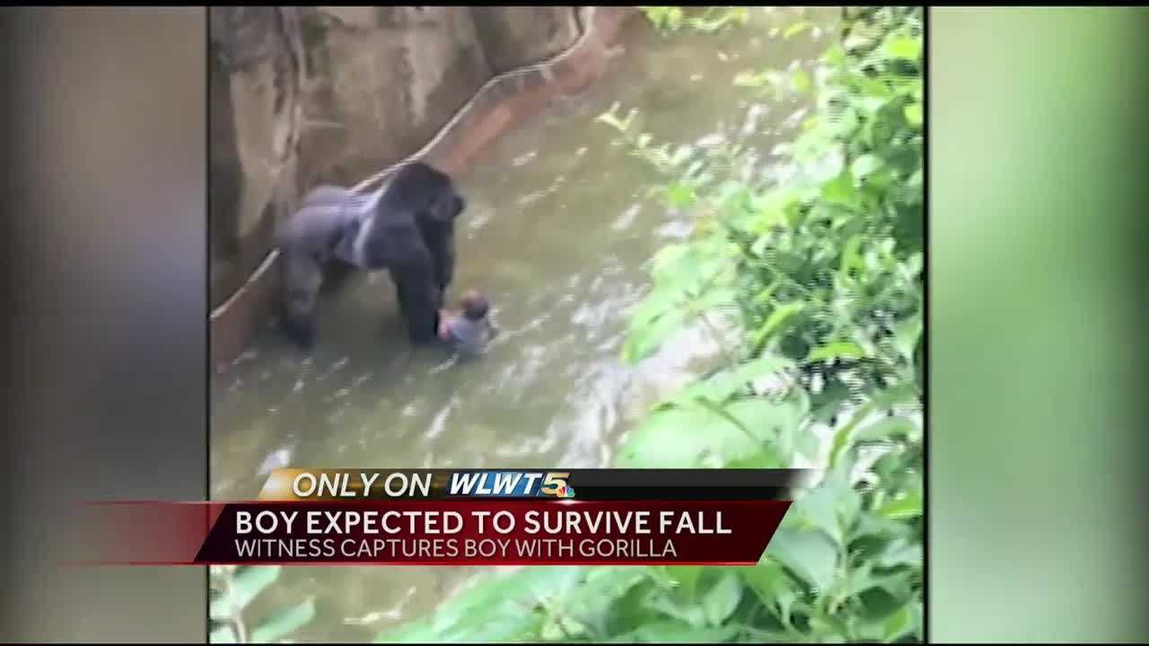 A child was rescued after falling into the gorilla enclosure at the Cincinnati Zoo Saturday, Cincinnati police and fire departments confirm.