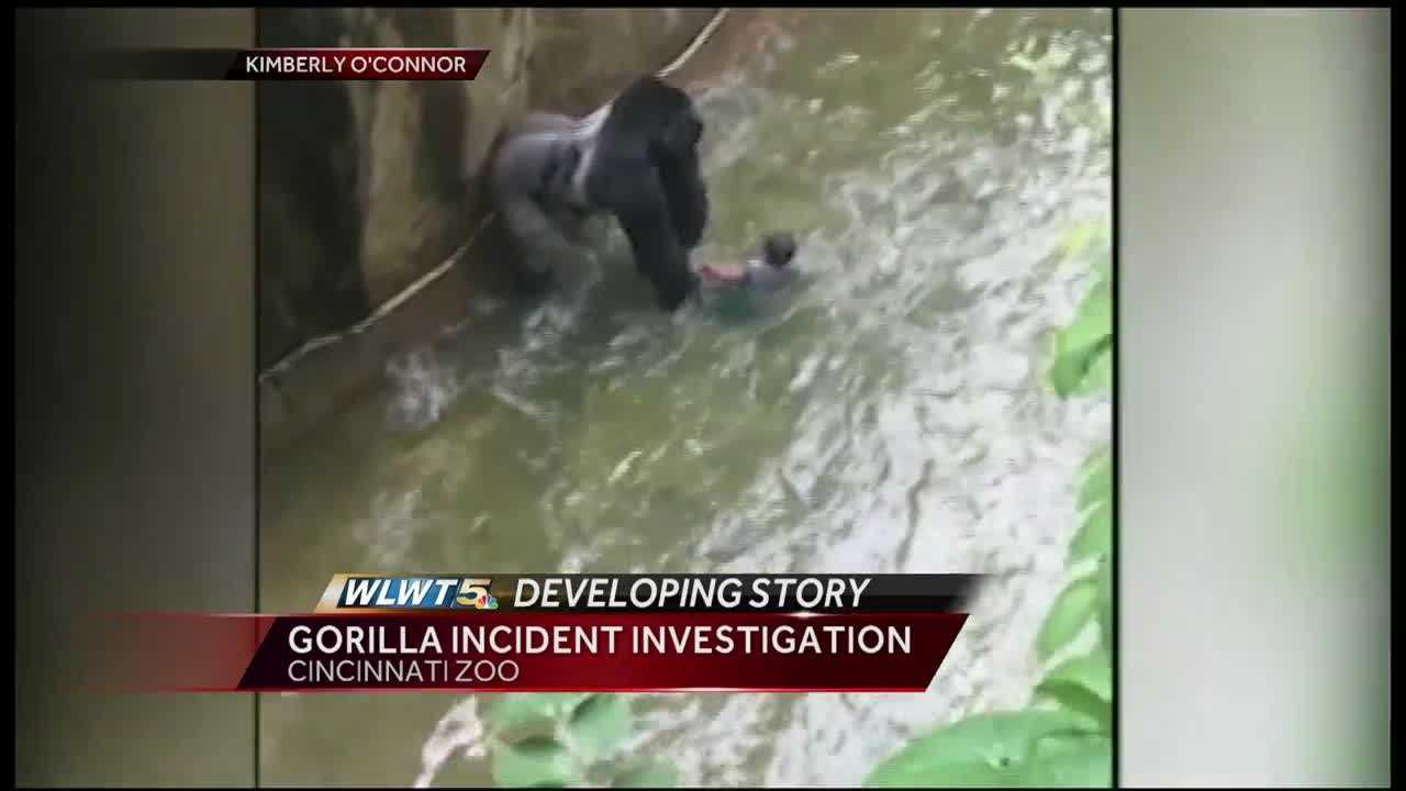 Cincinnati police are calling for more witnesses to come forward in the wake of Saturday's incident at the Cincinnati Zoo's Gorilla World enclosure.