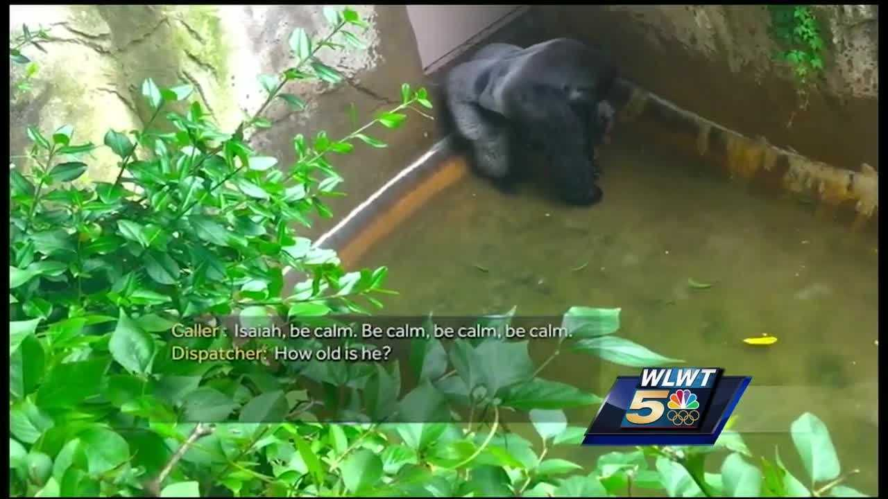 "Confusion and panic set in after a 3-year-old boy plunged into the Cincinnati Zoo's gorilla exhibit, according to 911 recordings released Wednesday, with the boy's mother pleading for help while repeatedly shouting at her son: ""Be calm!"""