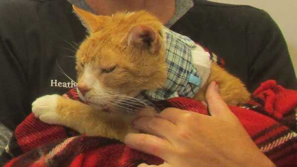 Little Guy was one of several cats that Sedamsville residents believe was poisoned.