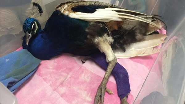 Photo viaAll Creatures Animal Hospital