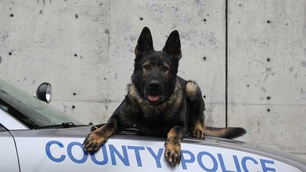 Kenton County Police Department's K-9 Loki will receive a bullet- and stab-protective vest thanks to Vested Interest in K-9s, Inc.