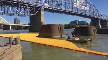 175,000 rubber ducks were dropped into the Ohio River Sunday in the 22nd Annual Rubber Duck Regatta, a fundraiser for the Freestore Foodbank in Cincinnati.