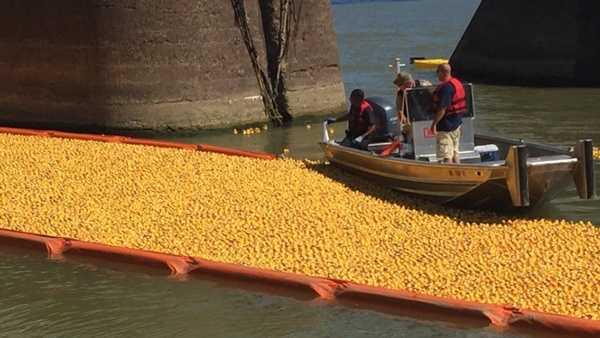 175,000 rubber ducks were dropped into the Ohio River Sunday in the 22nd Annual Rubber Duck Regatta, a fundraiser for the Freestore Foodbank in Cincinnati.