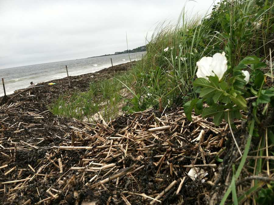Crews have spent the past three days cleaning up seaweed and debris at Scarborough Beach State Park.