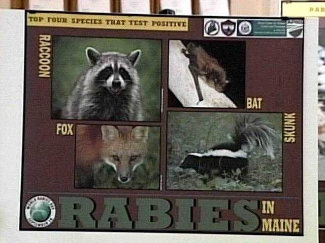 News 8's Jim Keithley reported on a high number of cases of rabies in one Maine community. Click here for the story.