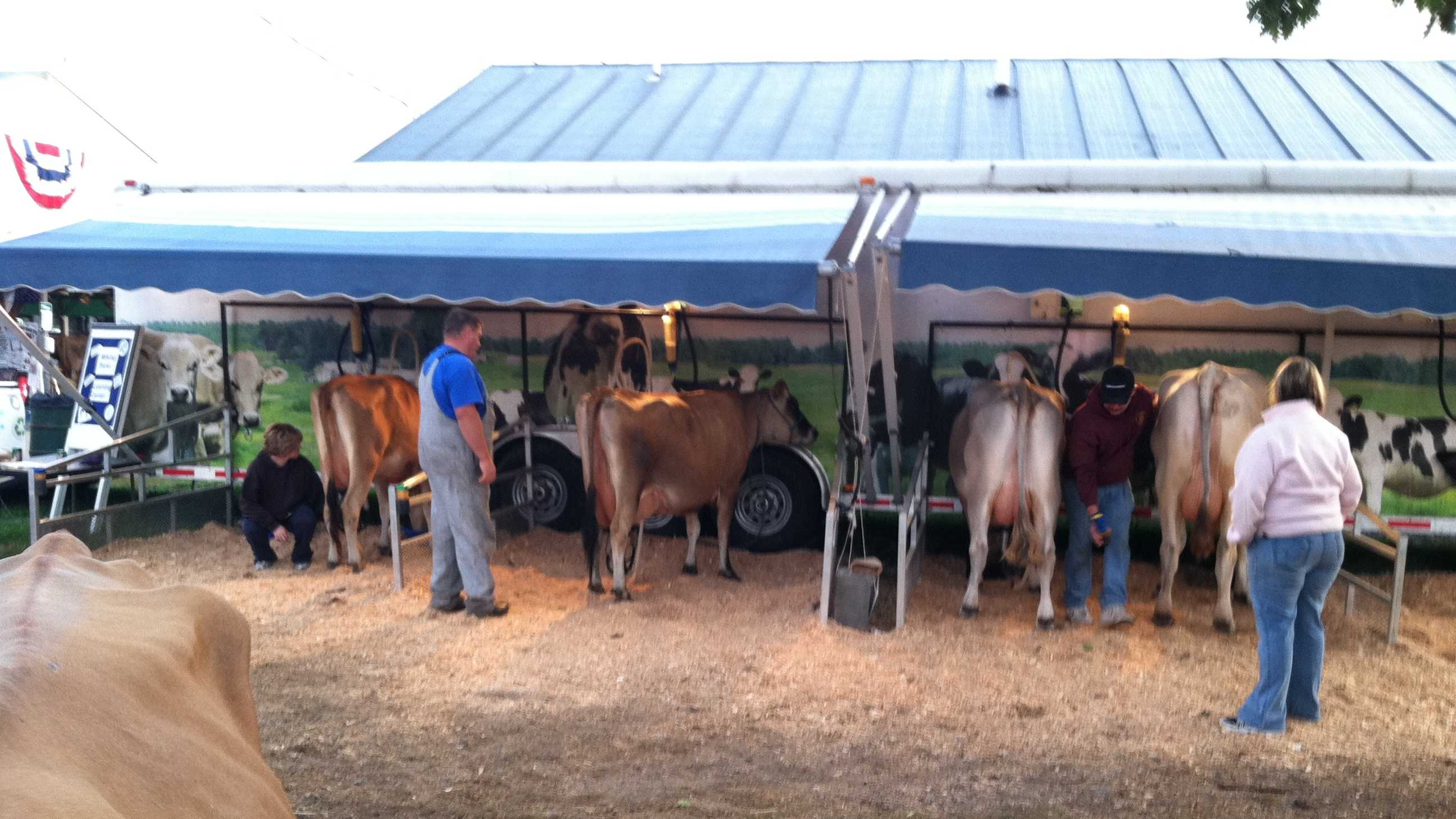 Sunday's events included 4-H Beef Show