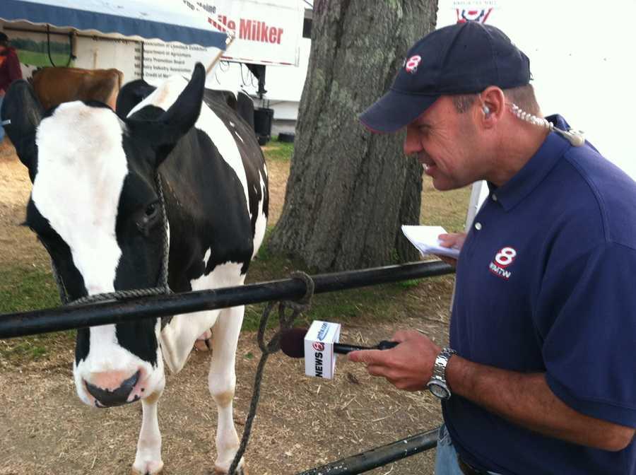 News 8's Norm Karkos interviews a cow