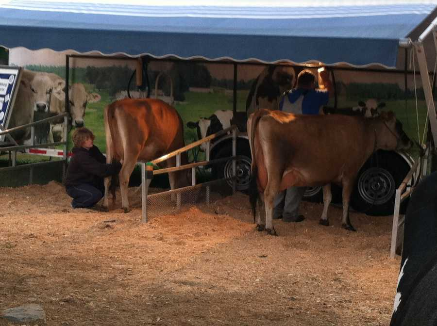 A cow milking contest is scheduled for Sunday afternoon.