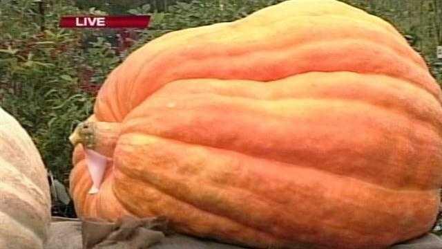 The Damariscotta Pumpkin Festival kicks off Saturday. News 8's  Norm Karkos has  a preview.