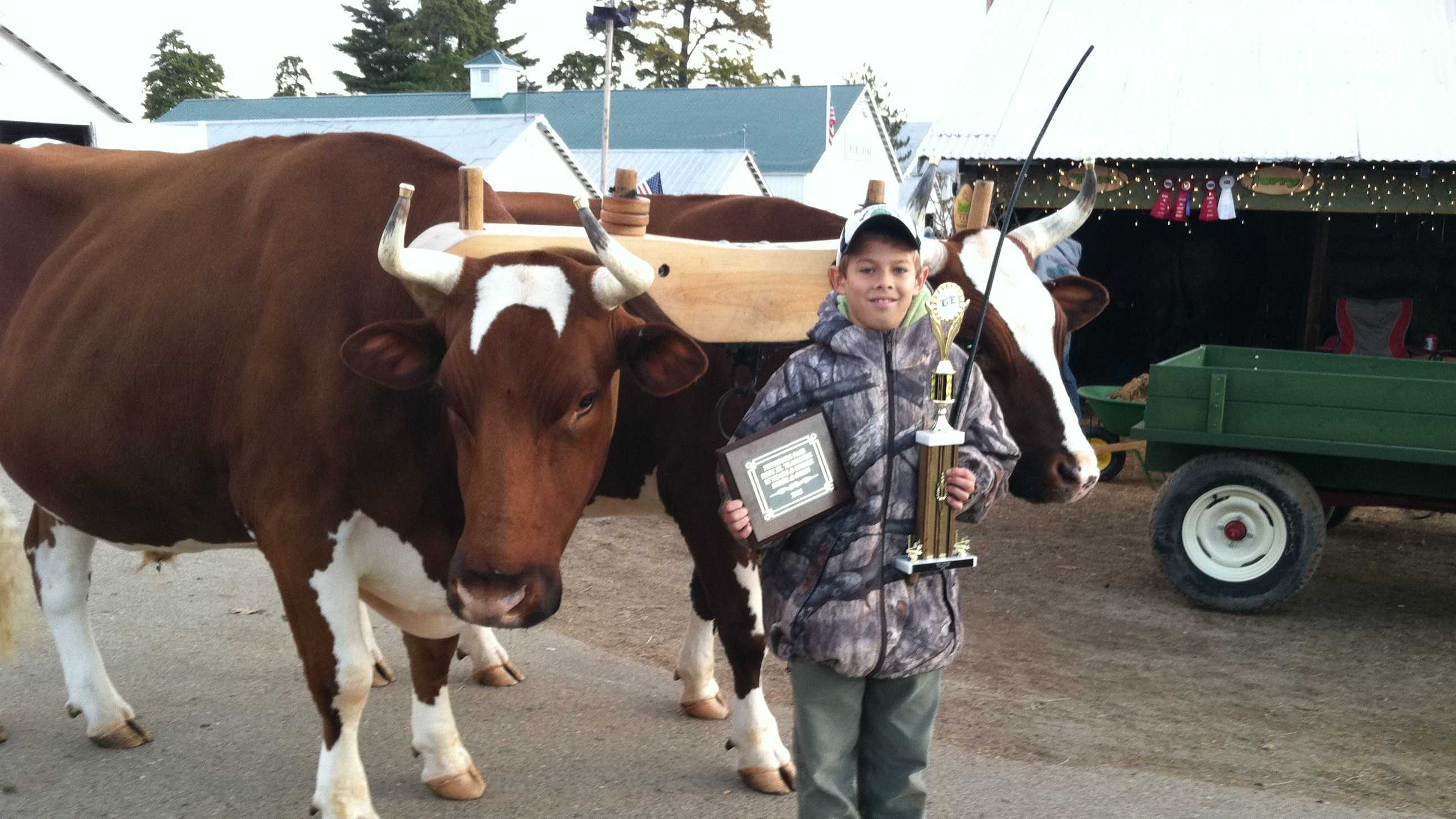 Hayden Lyford of Randolph, Vt. shows off his prize oxen and trophy ahead of the fair.