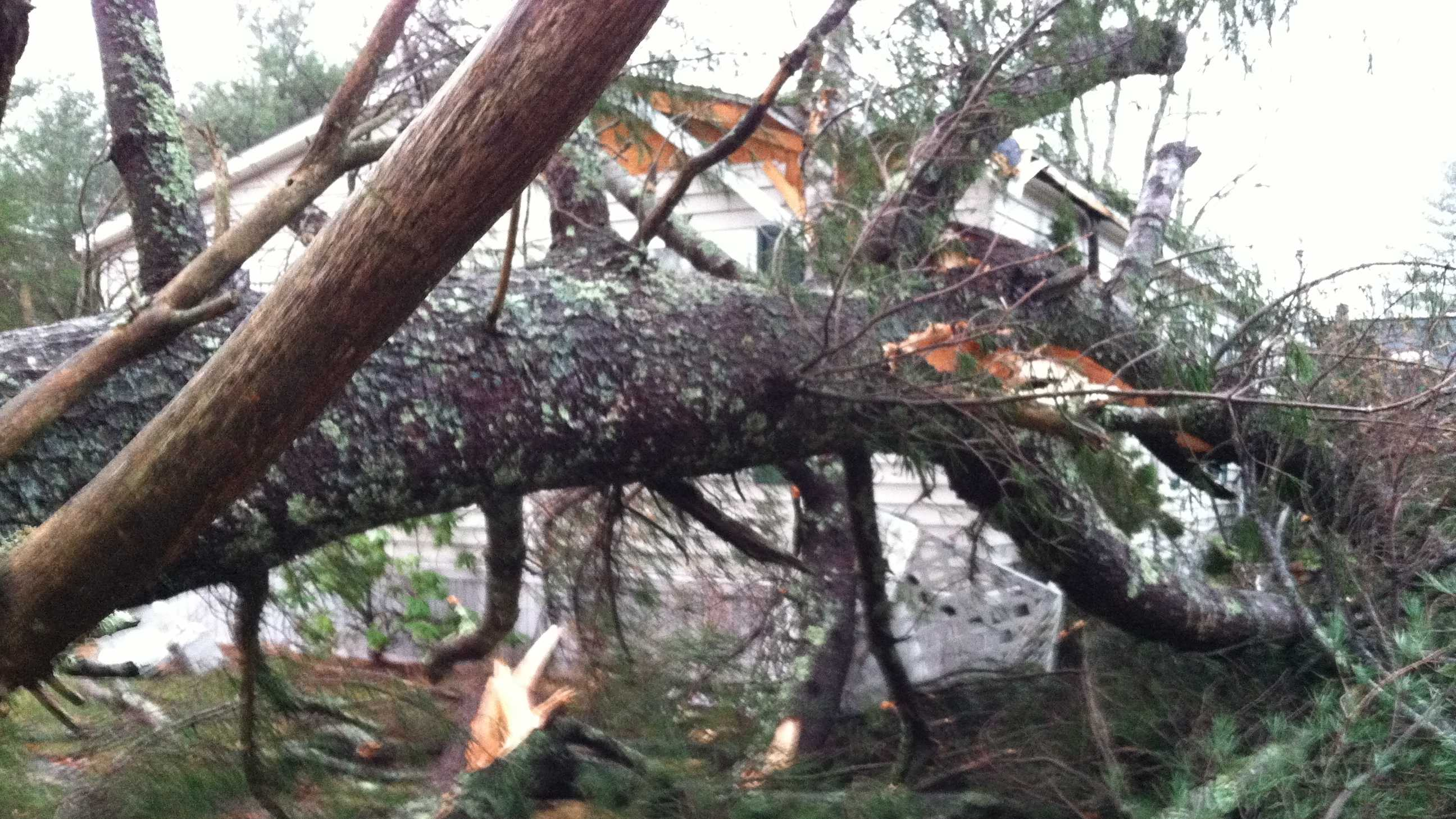Trees and power lines down in Buxton