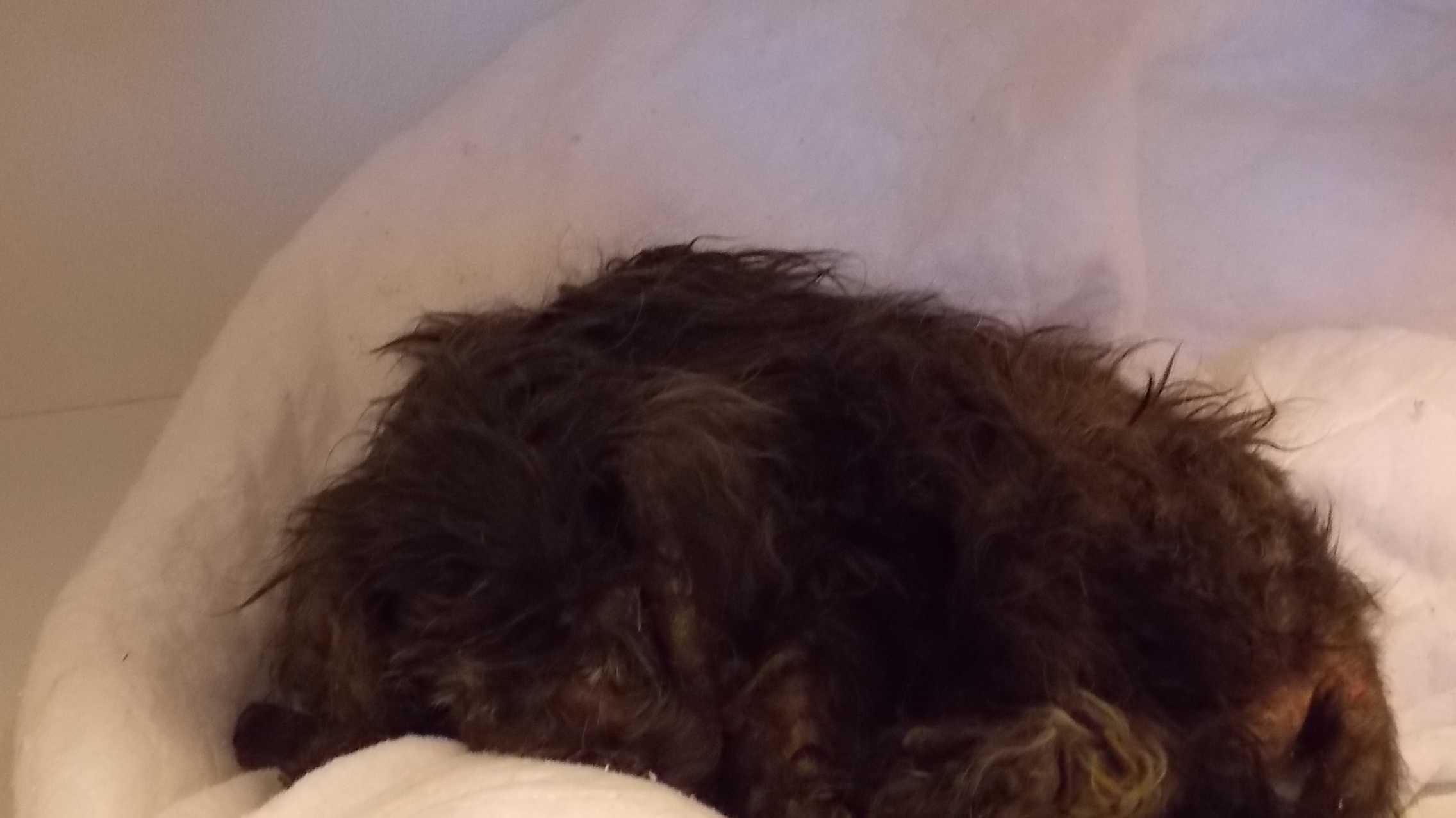 Neglected dog euthanized