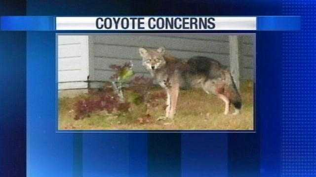 PORT Coyote Meeting Preview