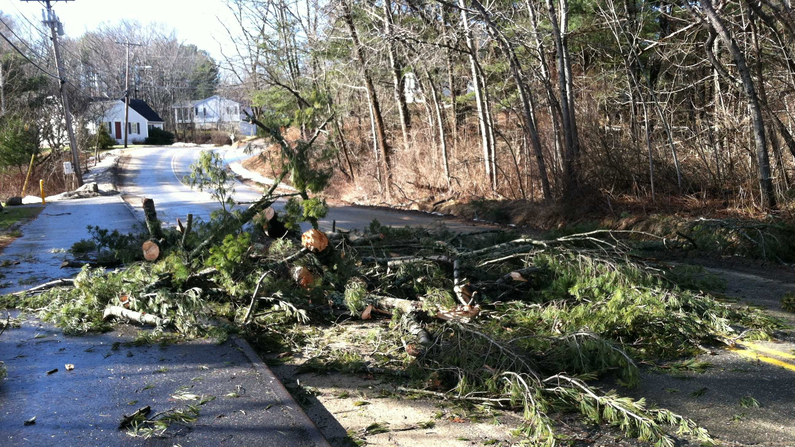 This tree came down blocking Summer Street in Topsham.