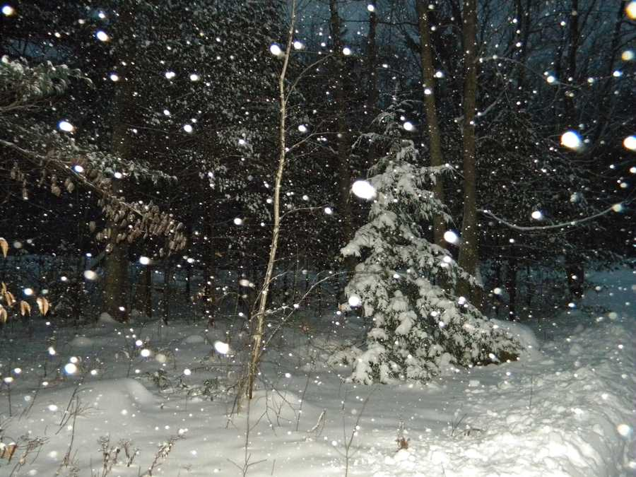 11: On February 18, 1900, 16 inches of snow fell in Portland