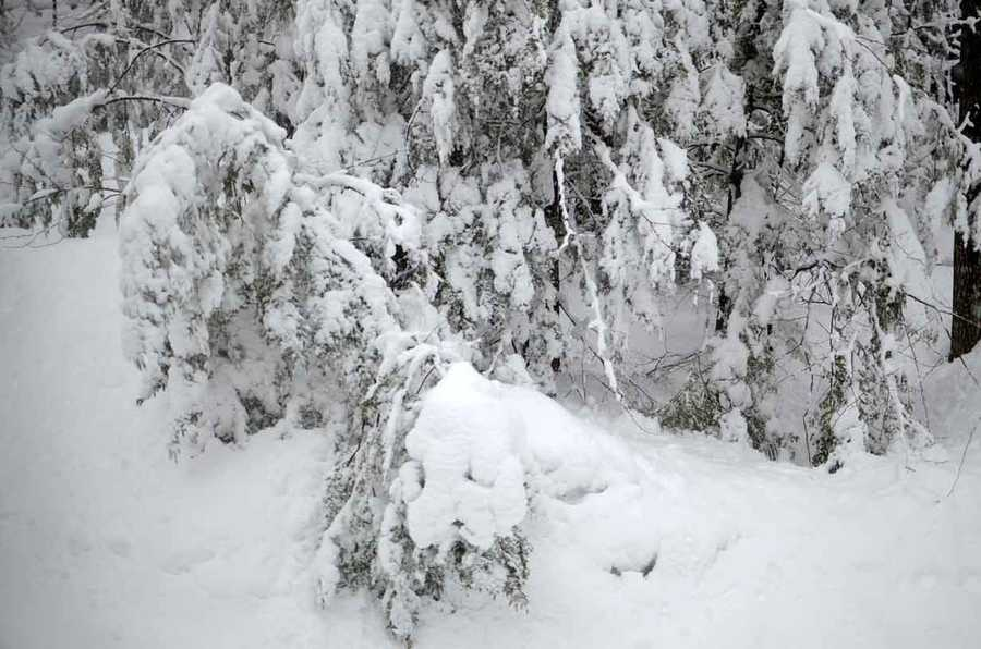 1: The most snow to ever fall in Portland in a 24 hour period was 22.3 inches on December 17, 1970.