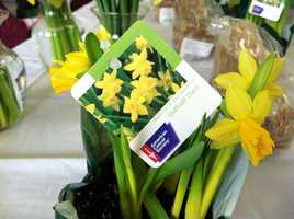 The first day of spring kicked off the annual Daffodil Days fundraising effort for the American Cancer Society.