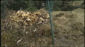 WMTW News 8's Norm Karkos talks about how to deal with the smell of a compost pile.