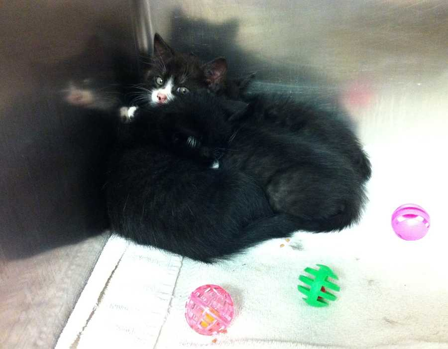 The shelter said Baumli opened the note, found all the cats still alive and carried them back to her house.