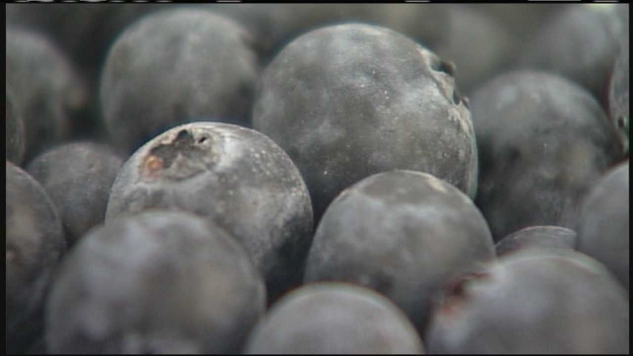 WMTW News 8's Norm Karkos has more on how to grow your own Maine blueberries.