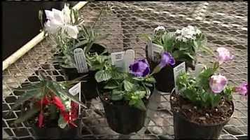 WMTW News 8's Norm Karkos talks about the best flower combinations for window boxes.