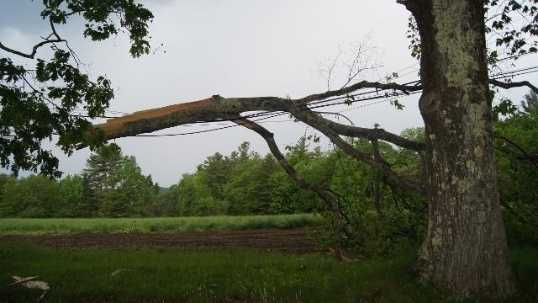 6-2-13-TREE-DOWN--500-CROCKETT-RIDE-RD--NORWAY--1--JPG.jpg