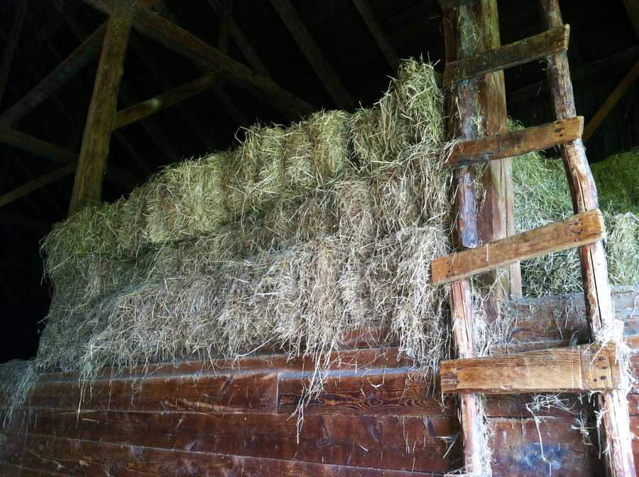 The wet summer has many hay farmers across Maine struggling.