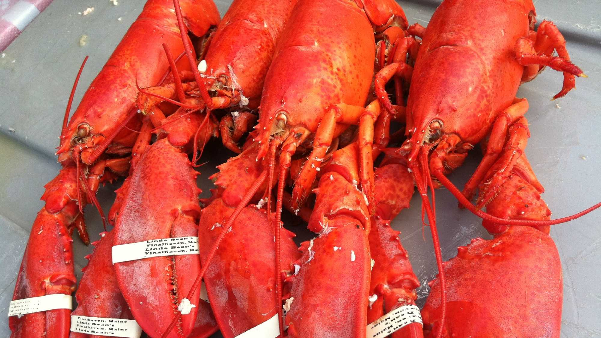 This is the 68th year for the Maine Lobster Festival