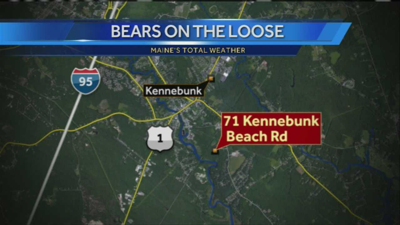 Authorities are looking for two bears spotted in several areas in Kennebunk's lower village and Sea Road areas. WMTW News 8's Katie Thompson reports.