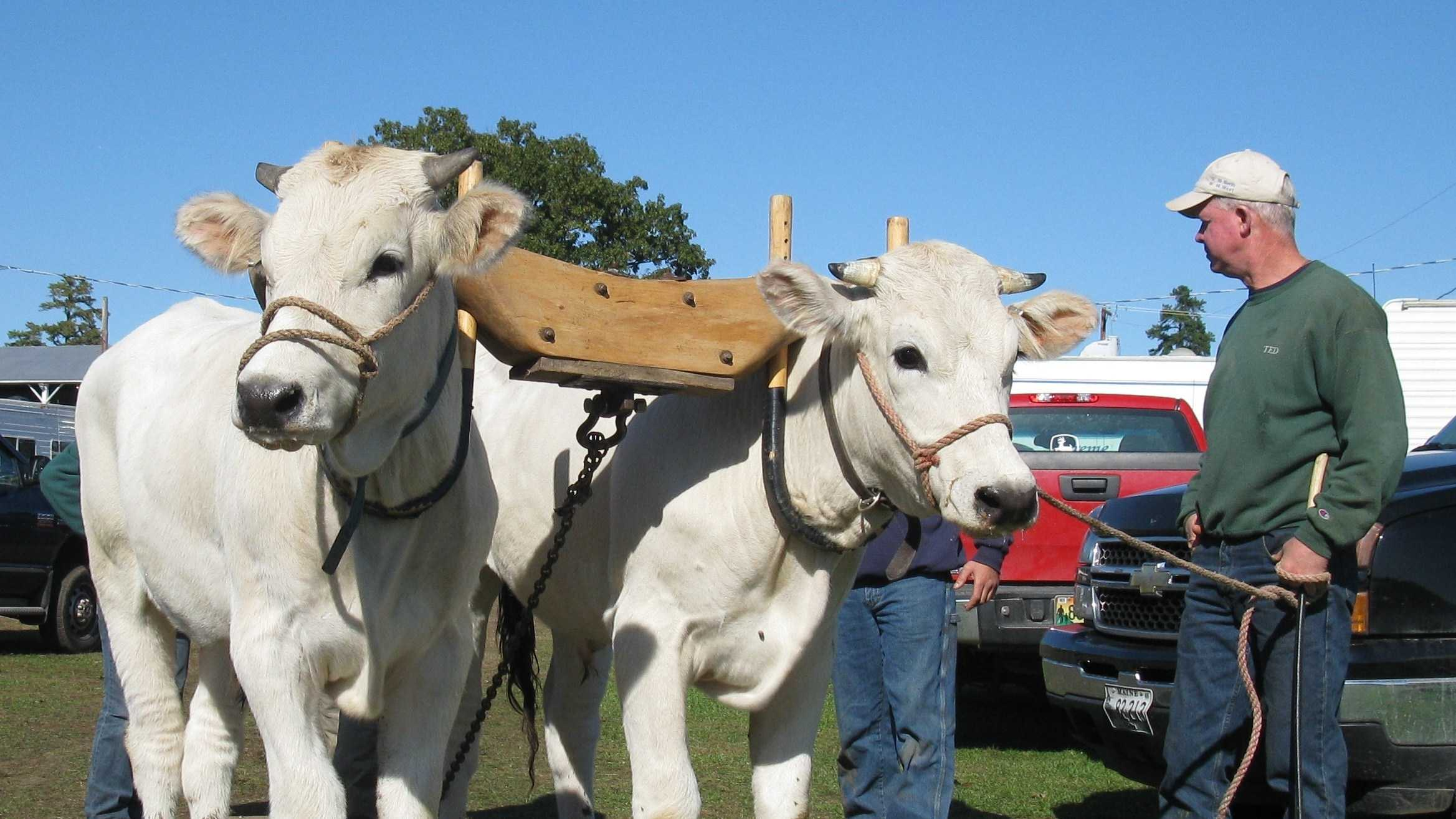 The Fryeburg Fair kicks off Sunday Sept. 29 and runs through Sunday Oct. 6. at the Fryeburg Fairgrounds. It is Maine's largest agricultural fair. Click here for more information.