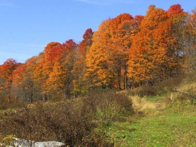 1. Woodstock, Vermont