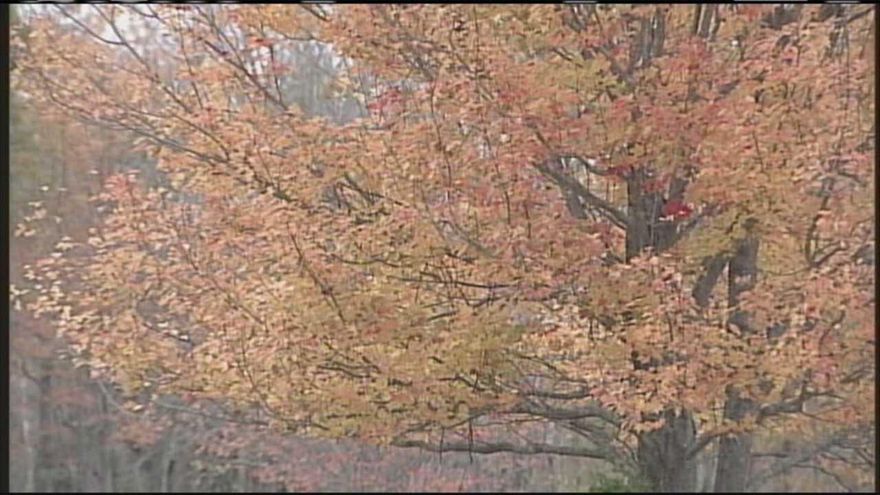 img-Maine s Fall Foliage Report